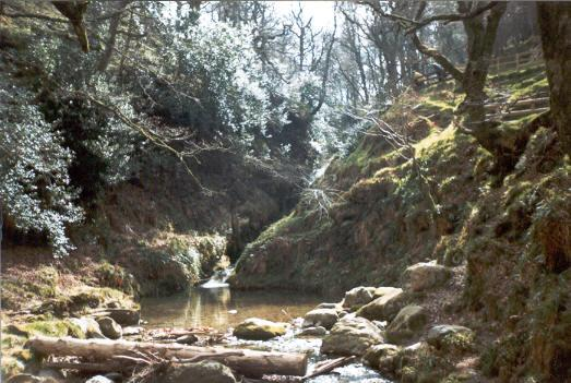 bosque-irlanda.jpg