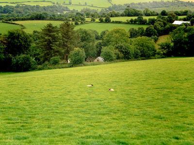 021-hermosa-vista-campina-irlandesa.jpg