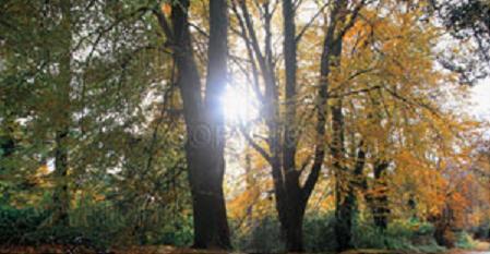 bosque-horoscopo.jpg