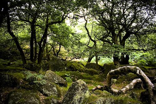 Leyendas – Bosques mágicos | IRLANDA-Reino de las Hadas y los ...