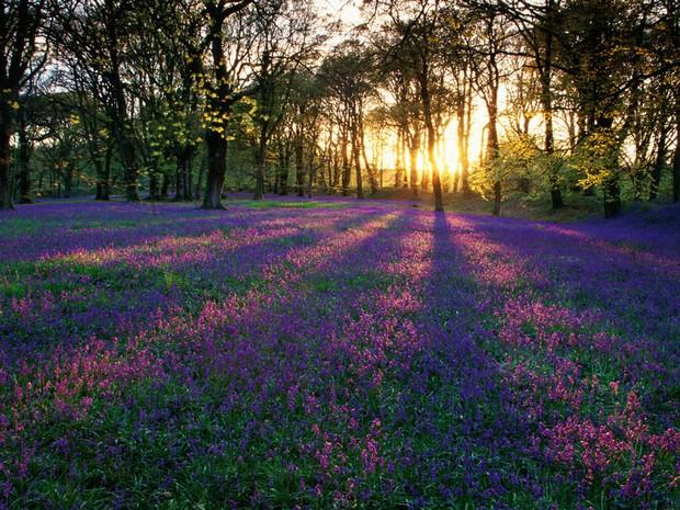campo-florido-paisagem-4c59d_big