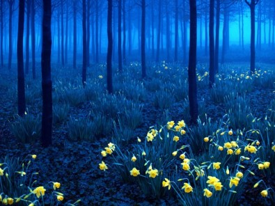 bosque-negro-alemania