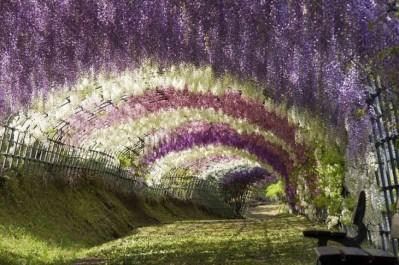 tunel-de-flores-japon